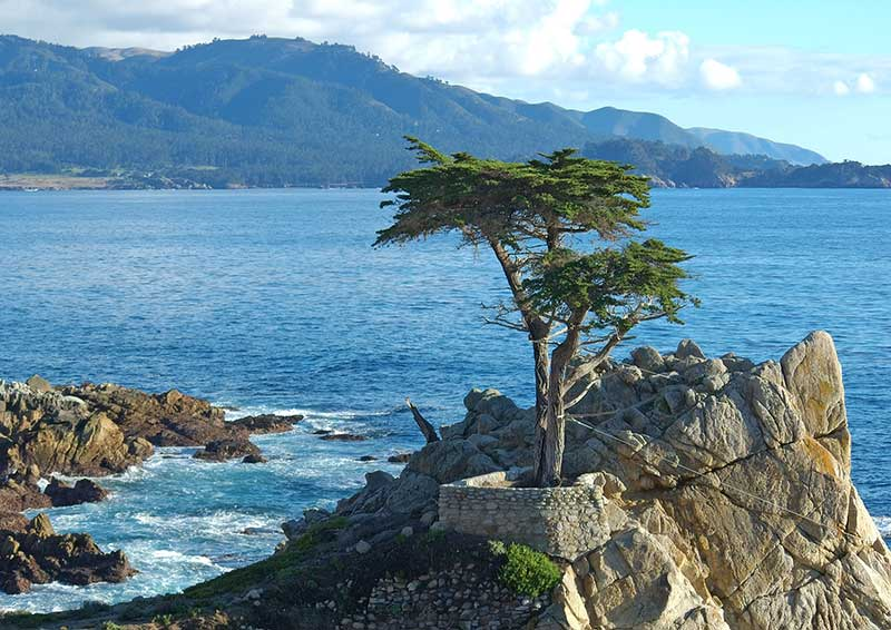 Lone Cypress in Monterey-1
