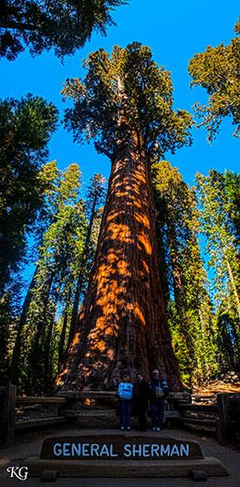 Giant Sequoias: General Sherman