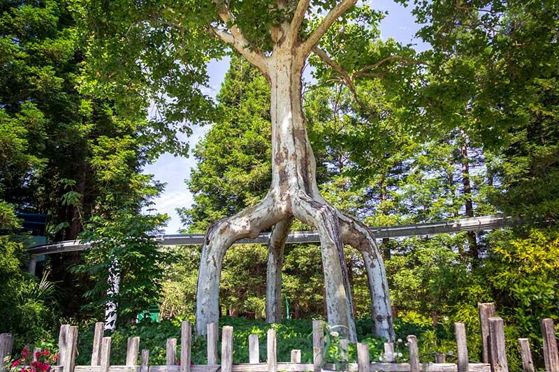 Circus Trees