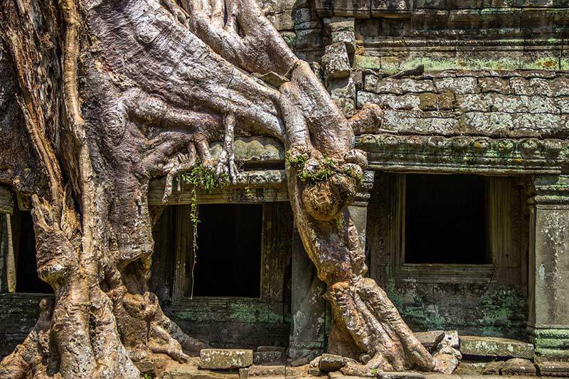 The Most Mysterious and Wonderful Trees in the World